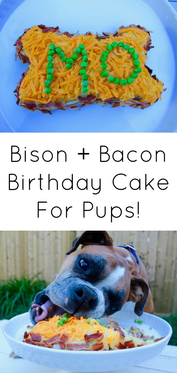 Dog birthday cake bison and bacon-8