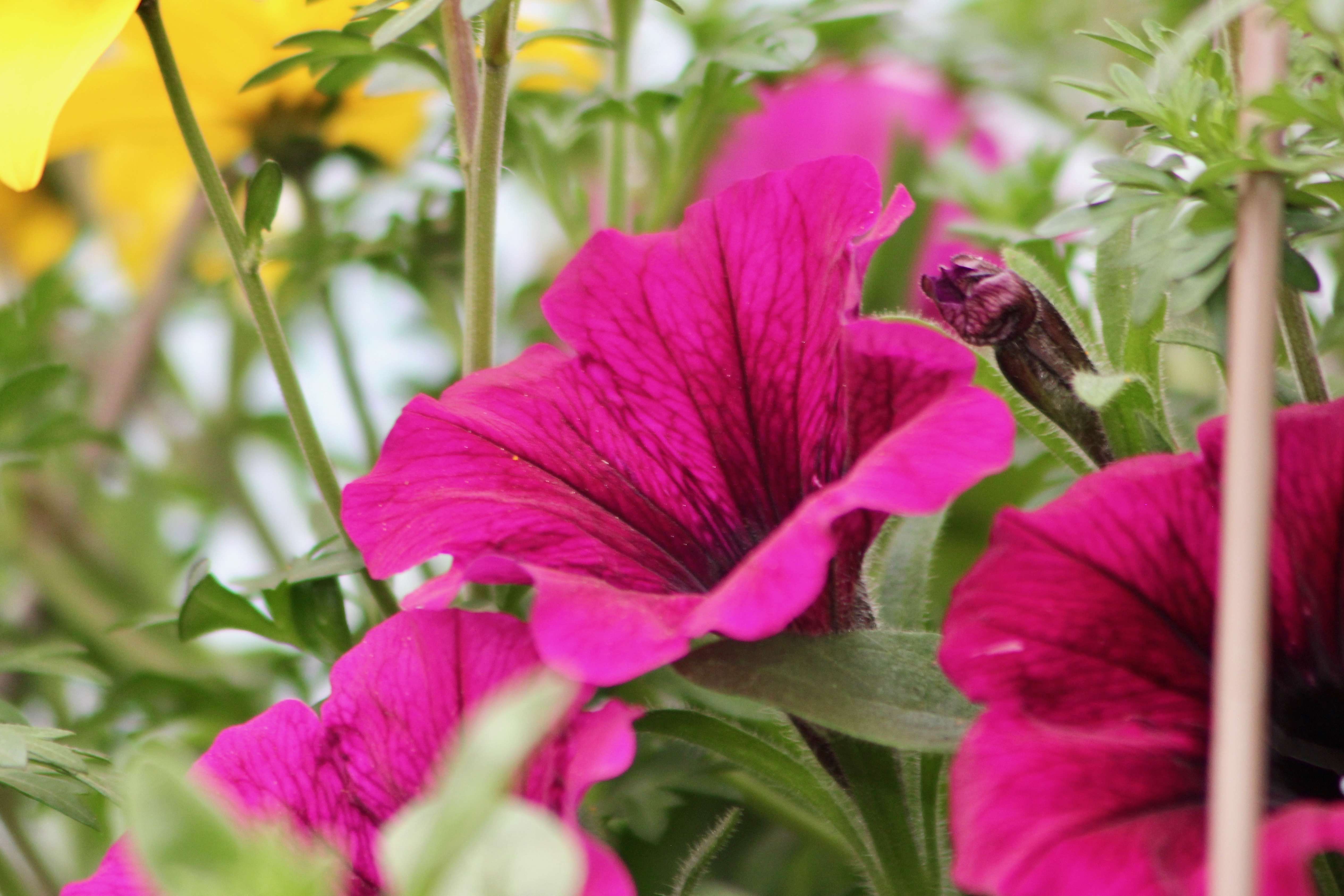 tips for savvy new gardeners-8
