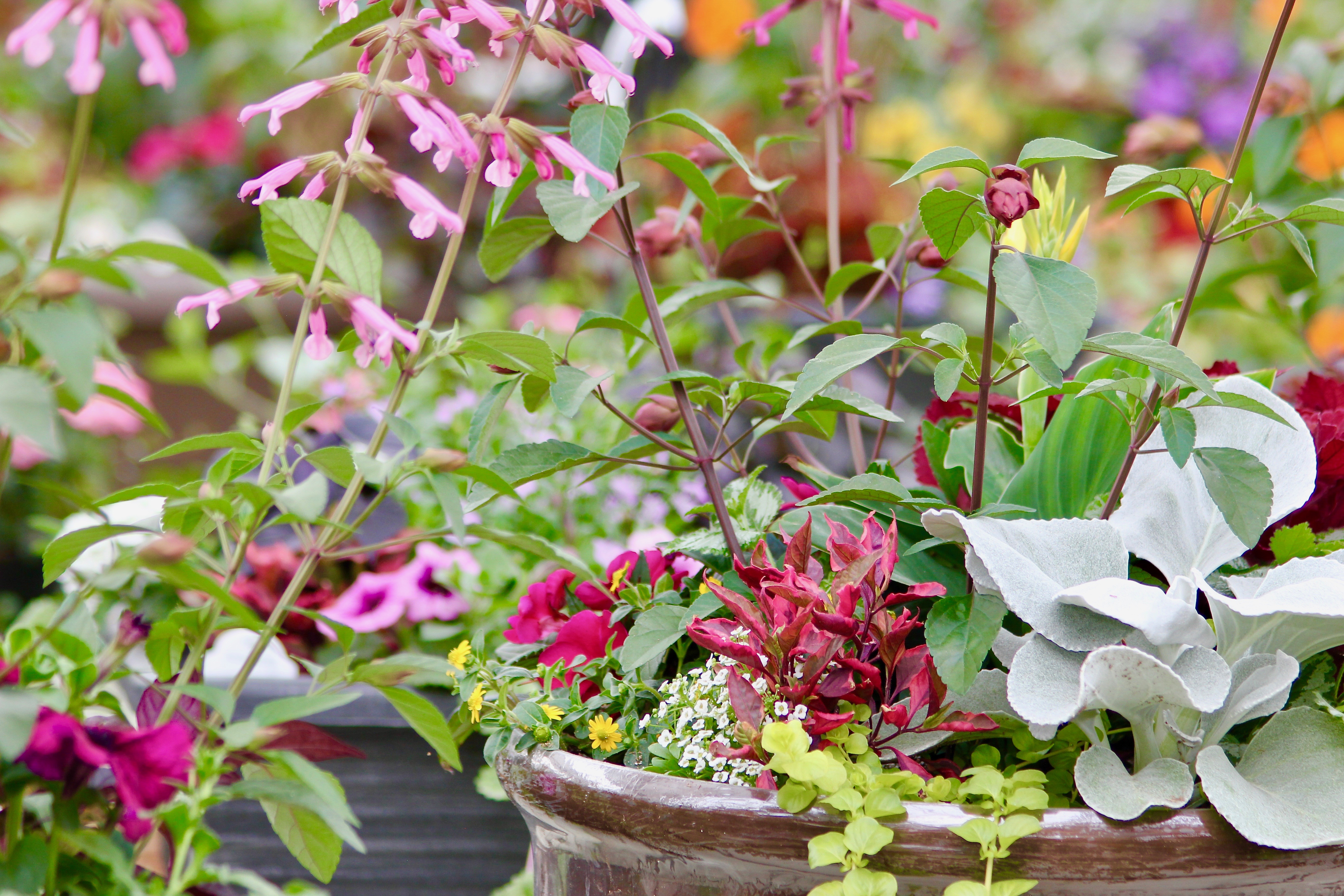 tips for savvy new gardeners-10