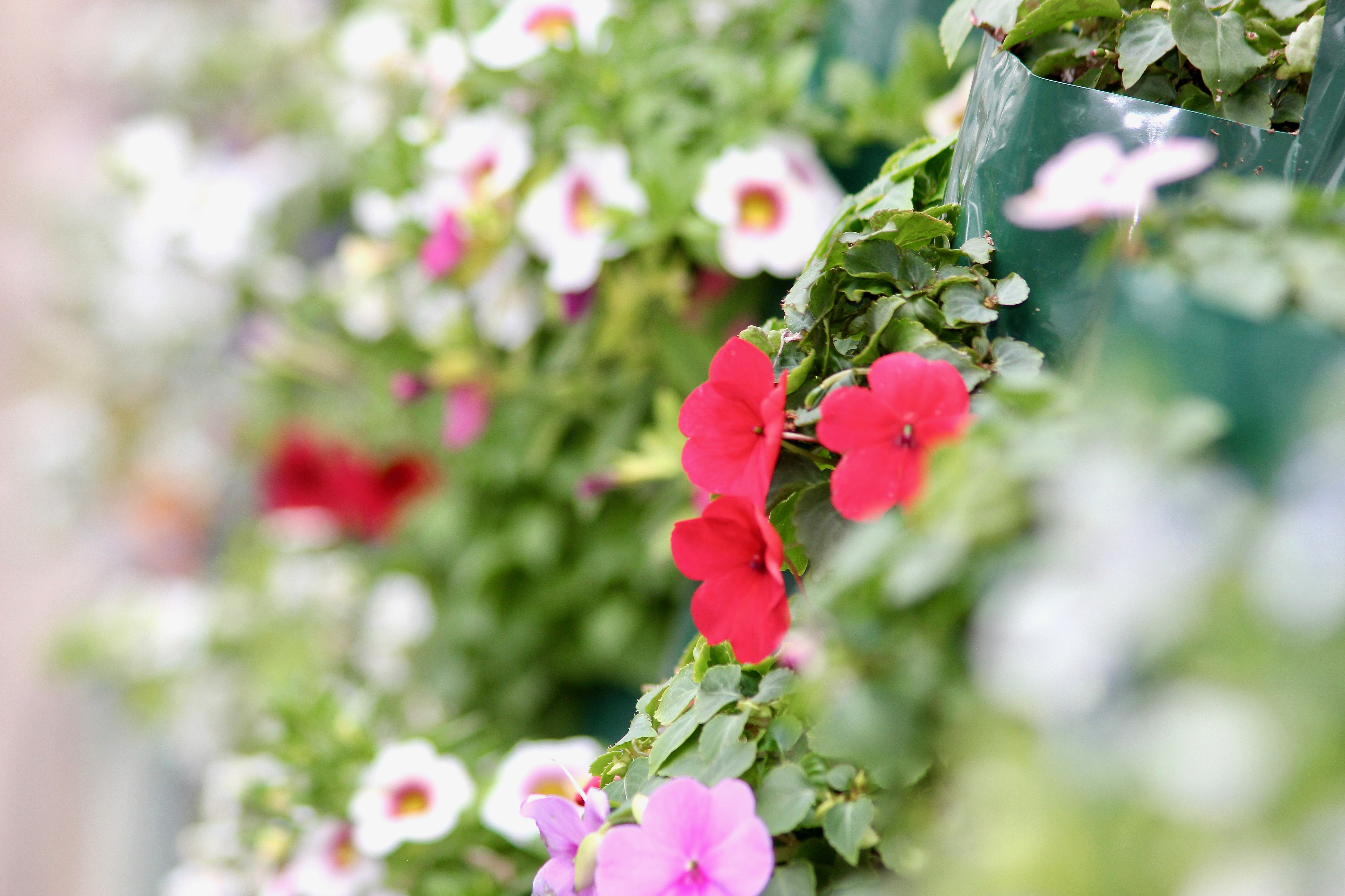 tips for savvy new gardeners-11