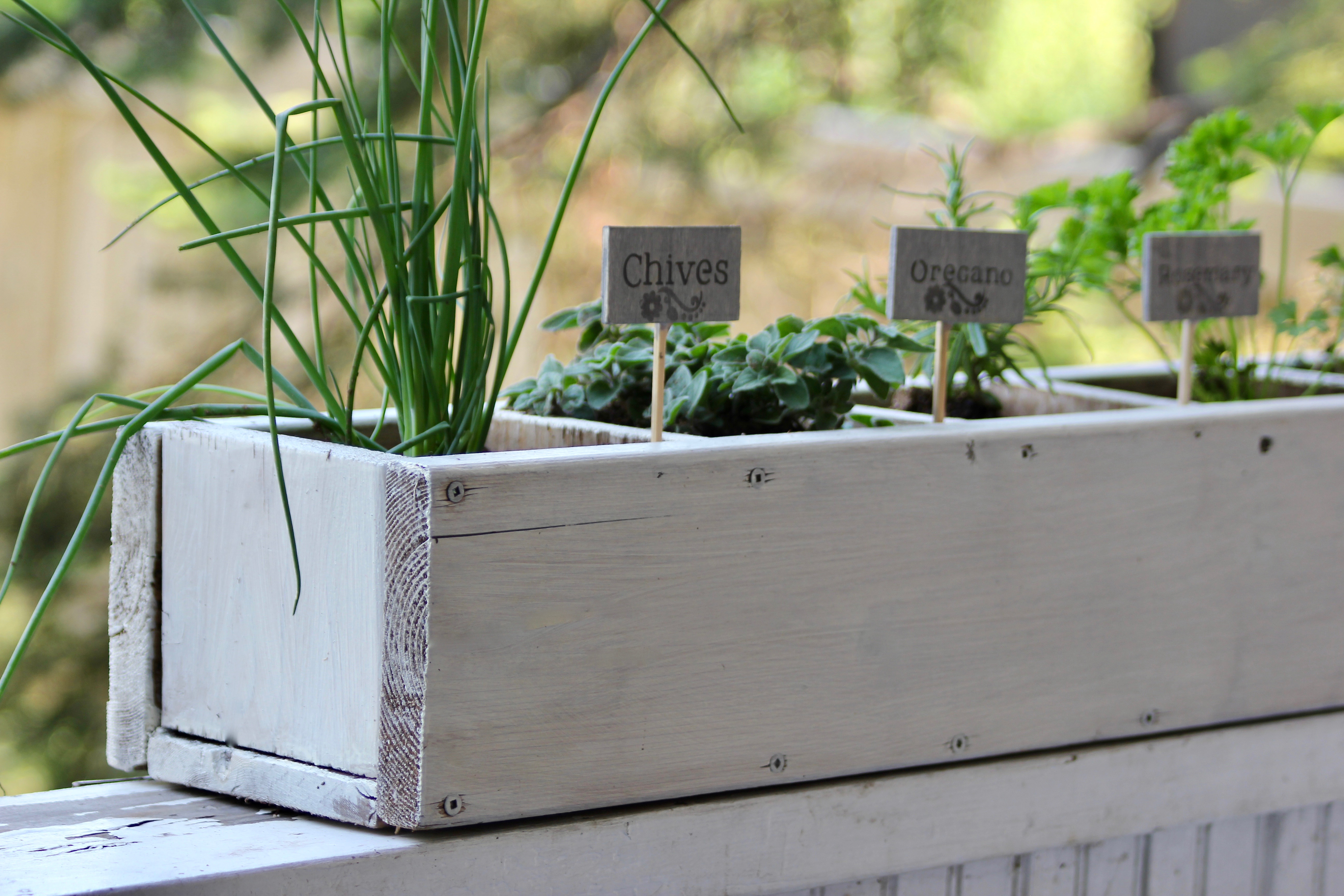tips for savvy new gardeners-13