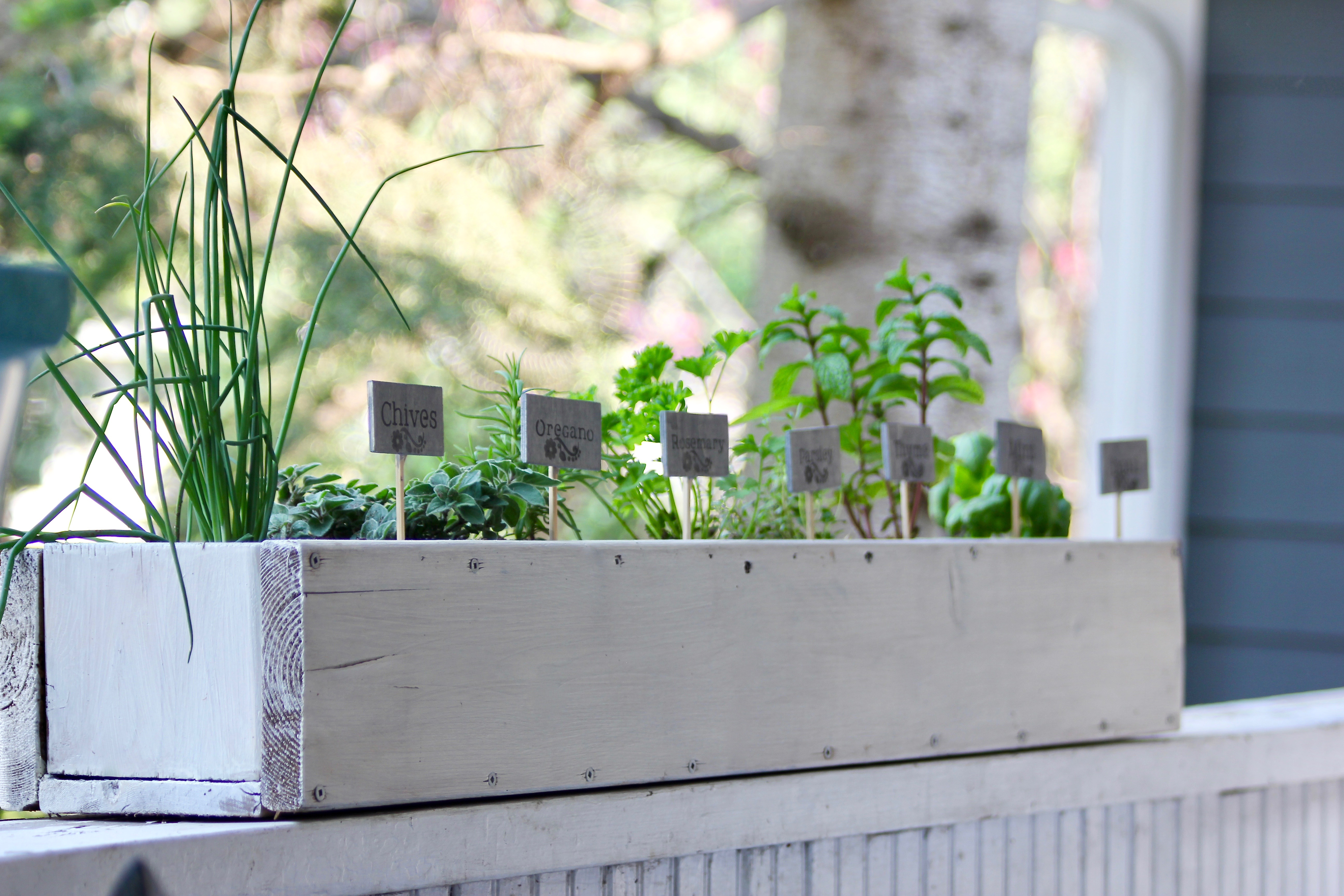 tips for savvy new gardeners-7