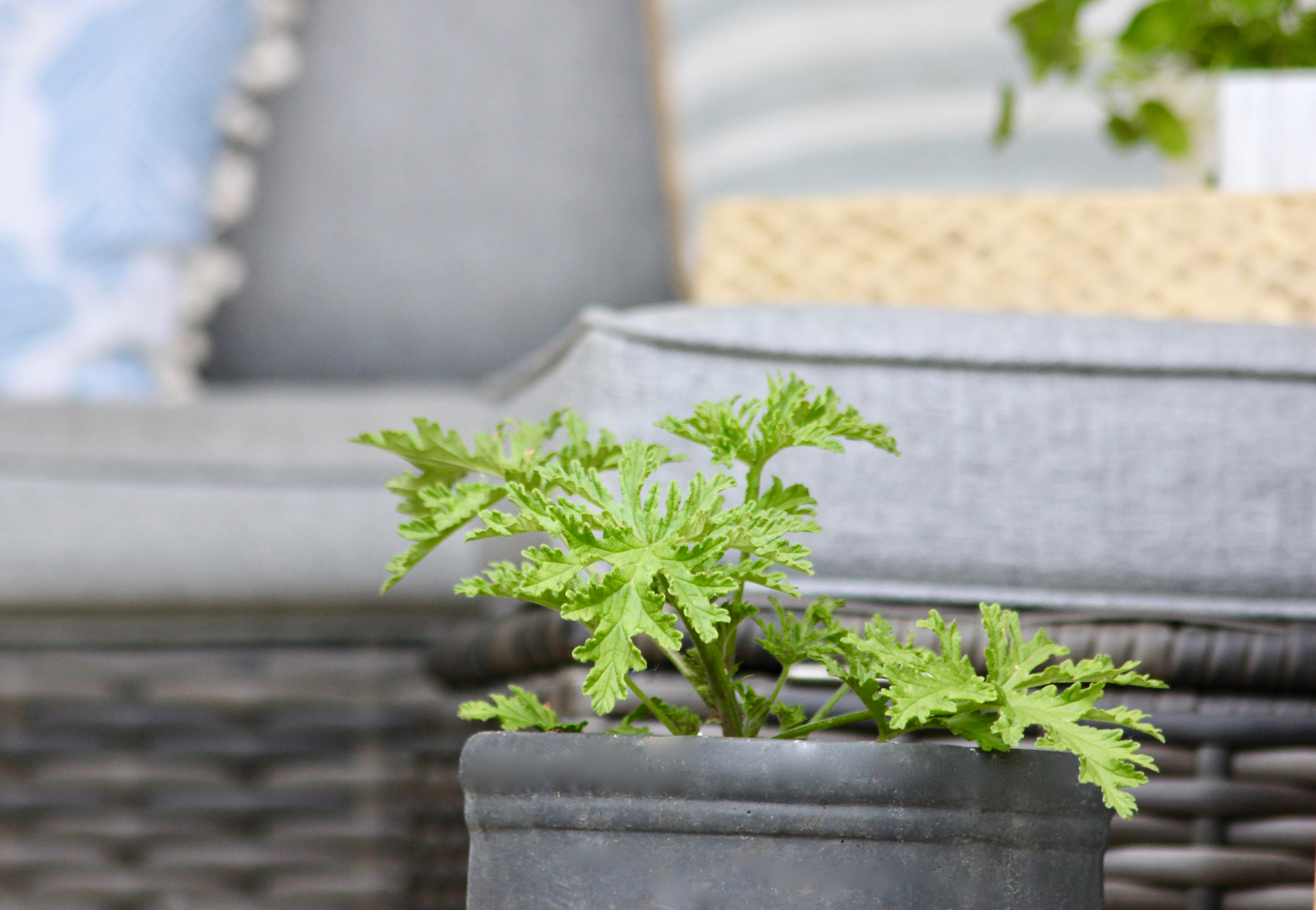 tips for savvy new gardeners-4