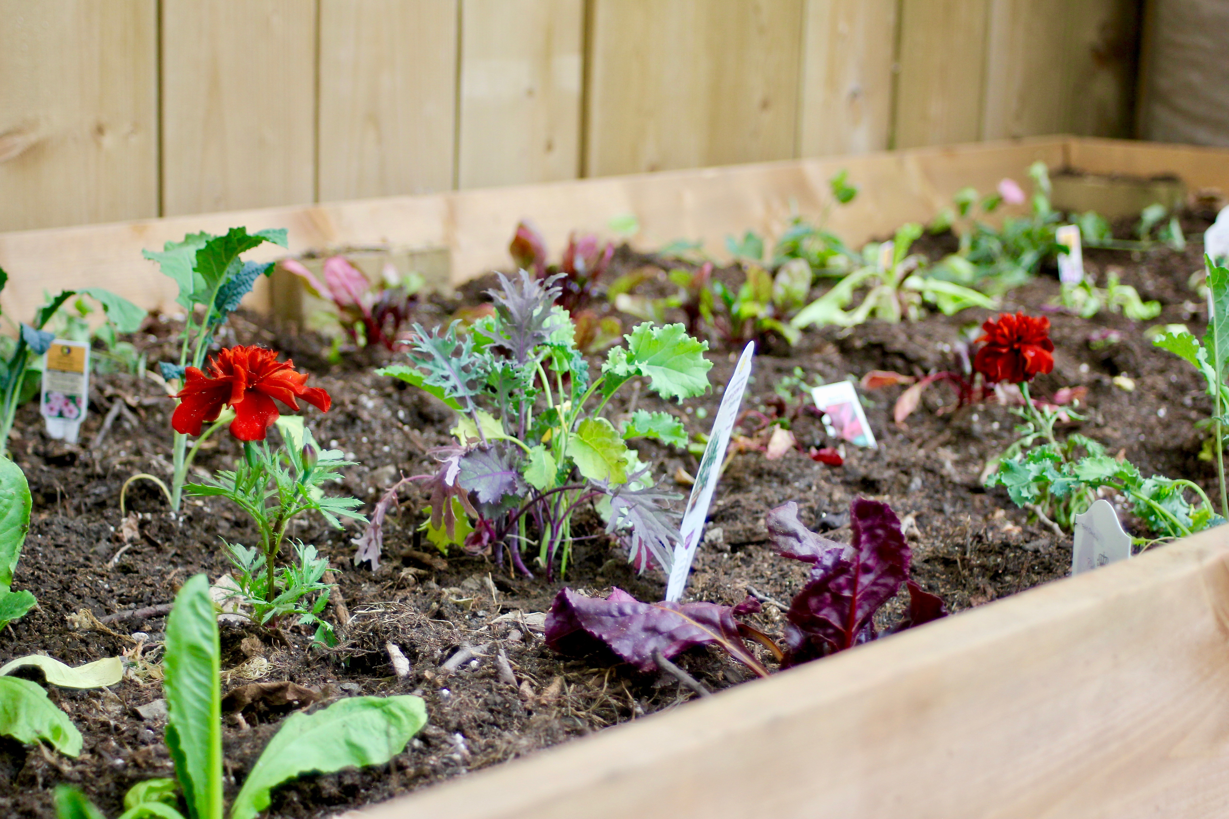 tips for savvy new gardeners-15