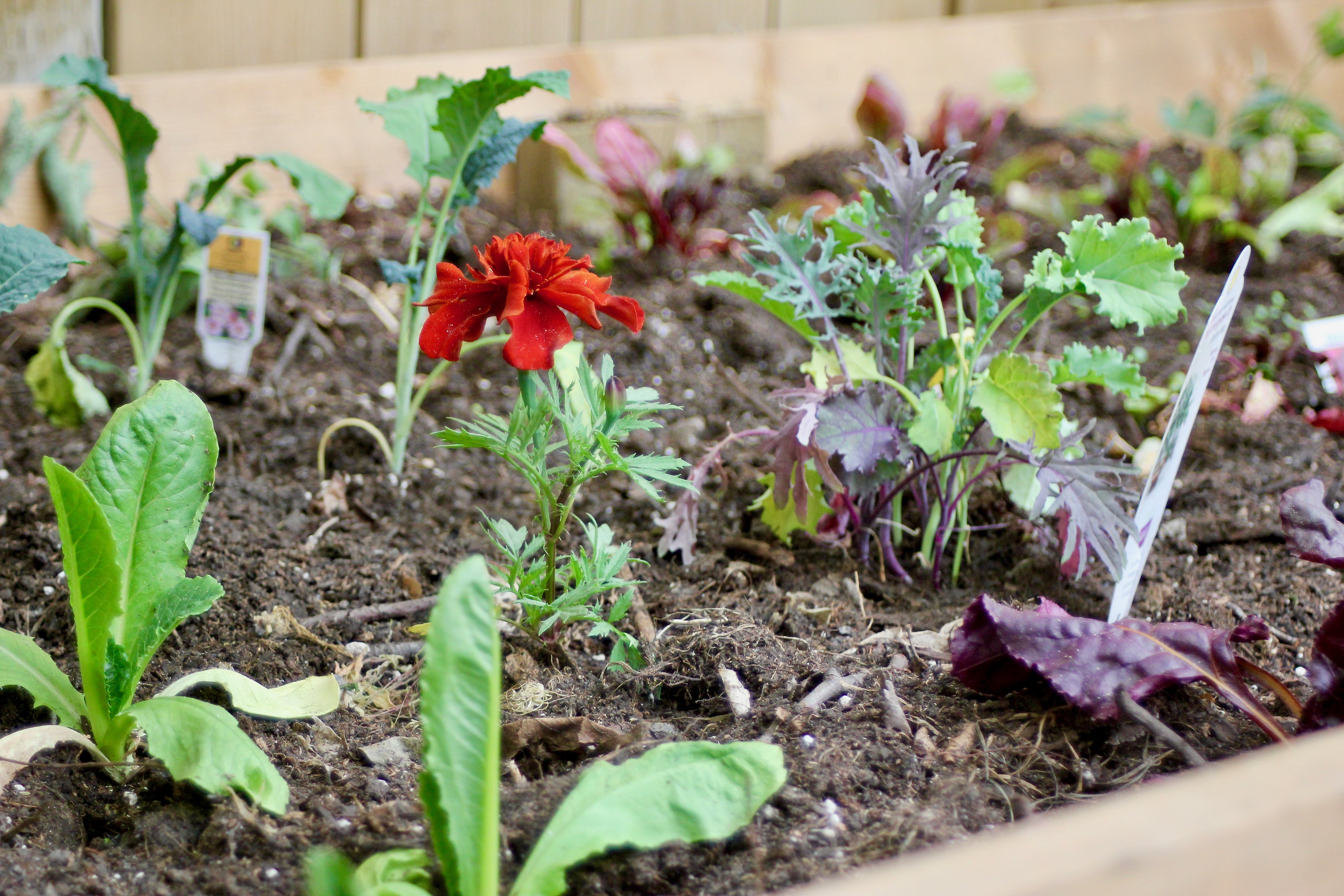 tips for savvy new gardeners-16